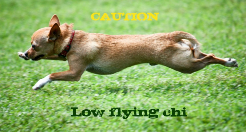 CautionLowFlying