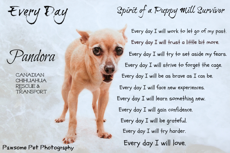 Spirit of puppy mill
