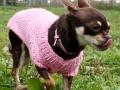 DogInSweater