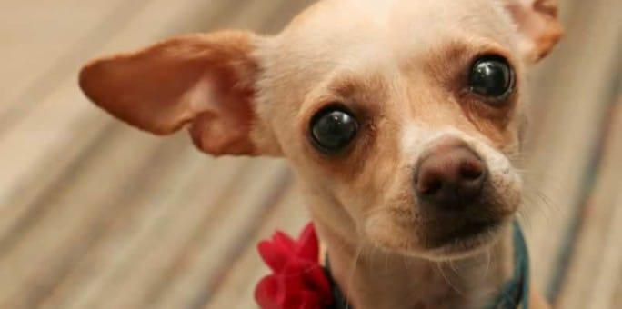 Beautiful Pippa has an Adoption Pending