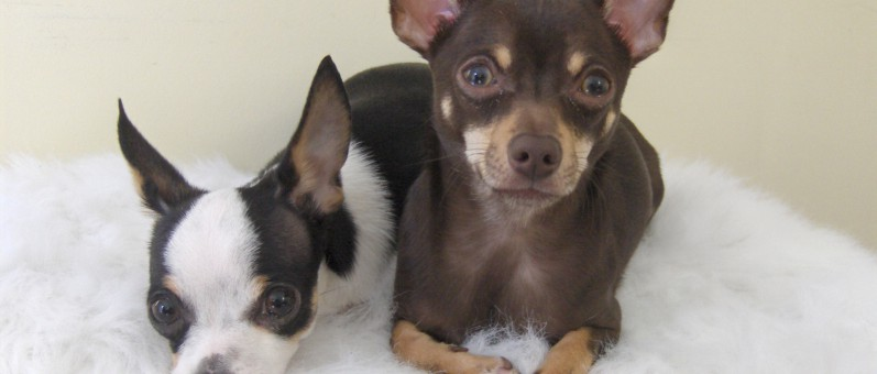 Puppy Love! Meet Chachi and Pablo