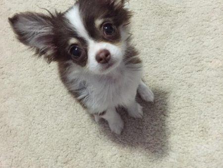 Cuddly Coco