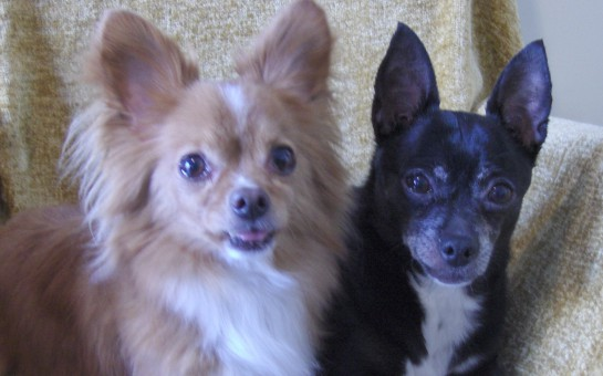 Introducing Mikey and Mitzi