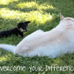 OvercomeDifferences