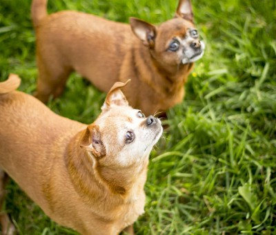 Keiko and Yuki Are Looking for a Home