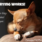 Worrying Works