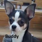 buddy-face
