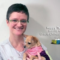 Gracie's New Beginning – A Whirlwind Chihuahua Adoption Story