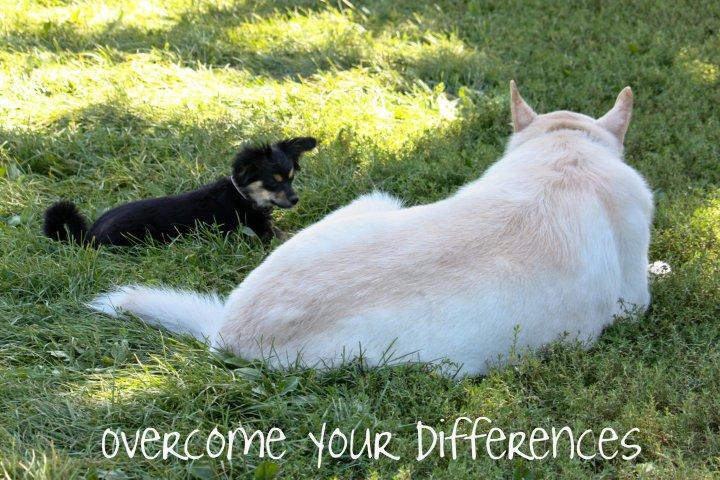 OvercomeDifferences
