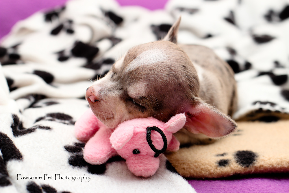 dogsleepwithtoy