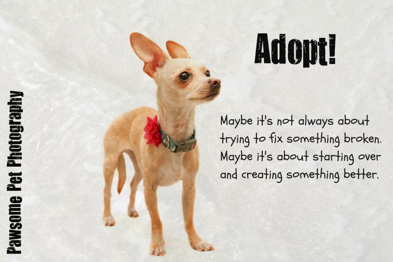 Adopt start new