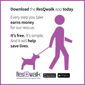 Raise Money for CCRT by Walking Your Dog